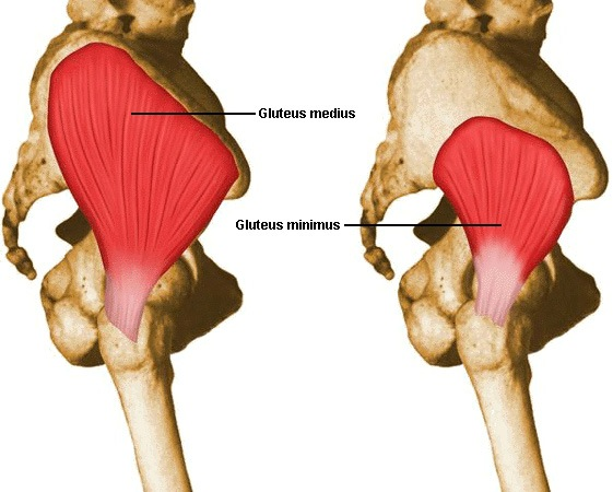 assessing and treating dysfunction of the gluteus medius mike reinold